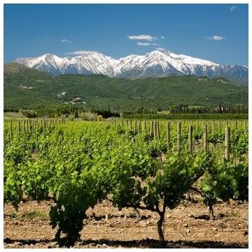 IGP des Côtes Catalanes