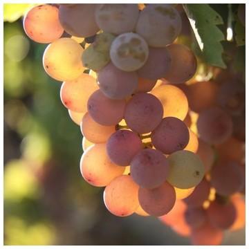vin de pays