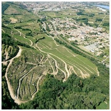 IGP des Côtes Rhodaniennes