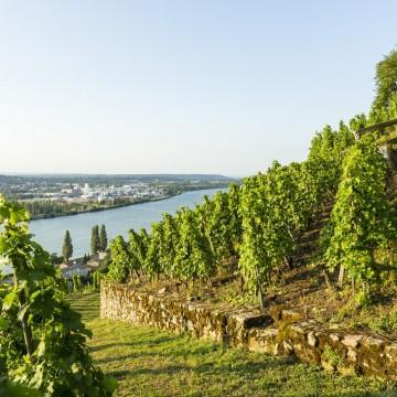 IGP Les Vignobles de Seyssuel