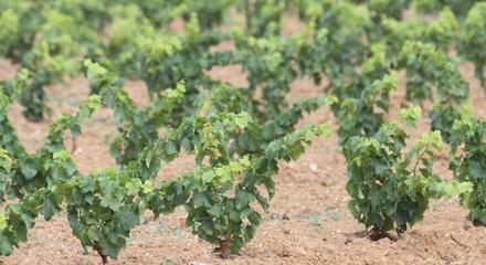 Planète vin, grands vins de France